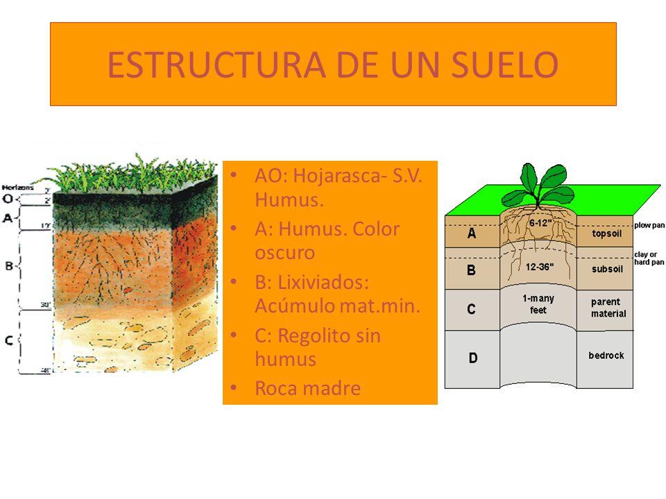 ESTRUCTURA DE UN SUELO AO: Hojarasca- S.V. Humus.