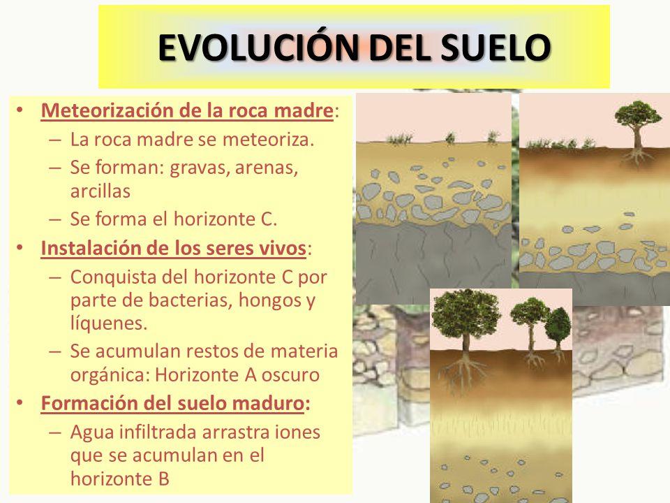 EVOLUCIÓN DEL SUELO Meteorización de la roca madre: