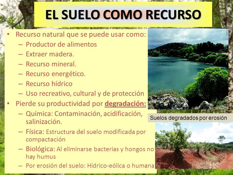 EL SUELO COMO RECURSO Recurso natural que se puede usar como: