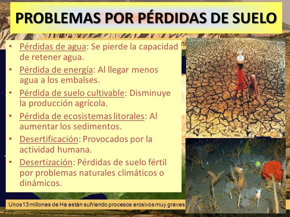 PROBLEMAS POR PÉRDIDAS DE SUELO