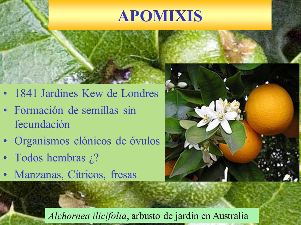 APOMIXIS 1841 Jardines Kew de Londres