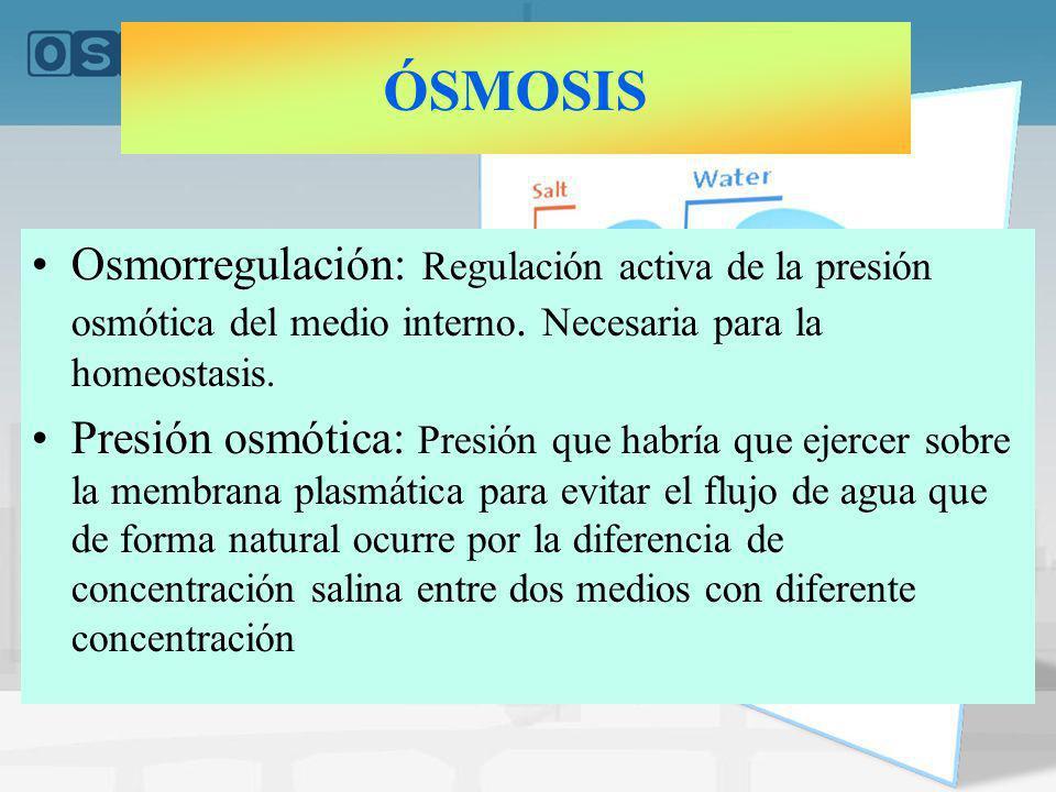 ÓSMOSIS Osmorregulación: Regulación activa de la presión osmótica del medio interno. Necesaria para la homeostasis.
