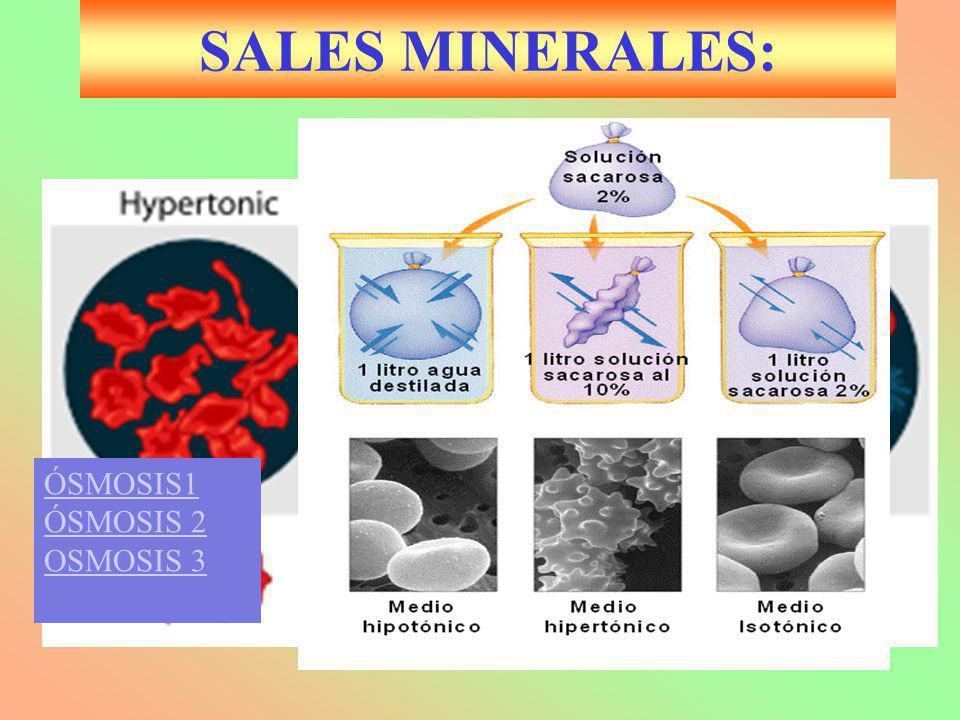 Biología 2º SALES MINERALES: ÓSMOSIS1 ÓSMOSIS 2 OSMOSIS 3 J.M.Freire