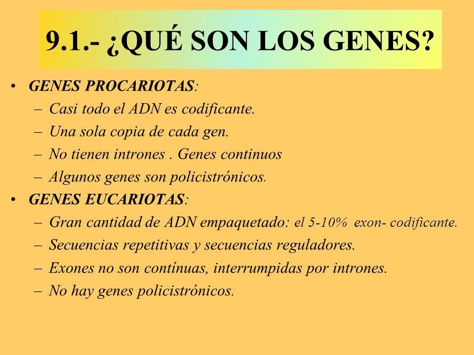 9.1.- ¿QUÉ SON LOS GENES GENES PROCARIOTAS: