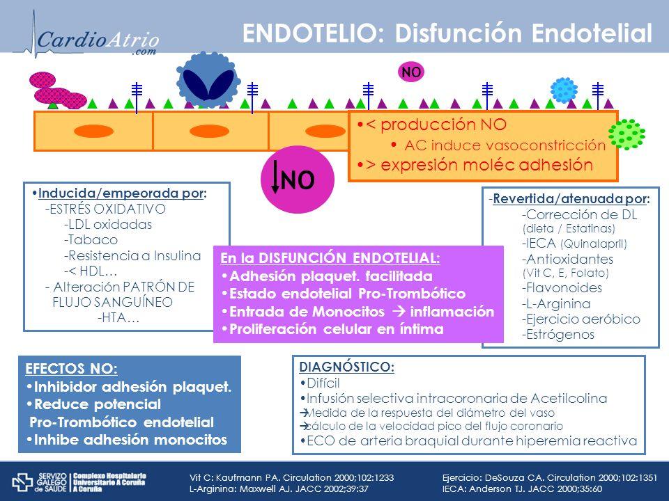 ENDOTELIO: Disfunción Endotelial