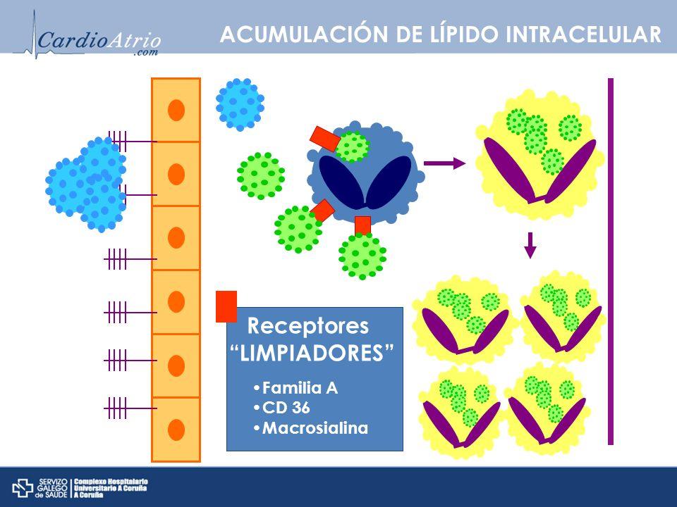 Receptores LIMPIADORES