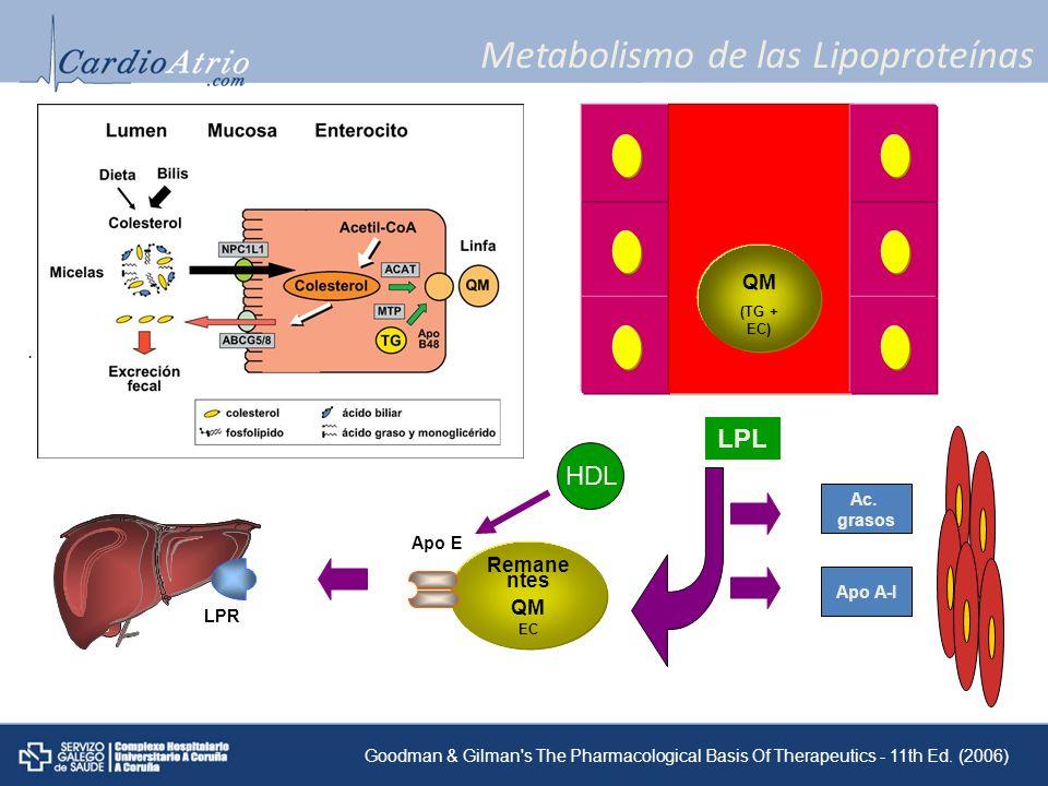 Metabolismo de las Lipoproteínas