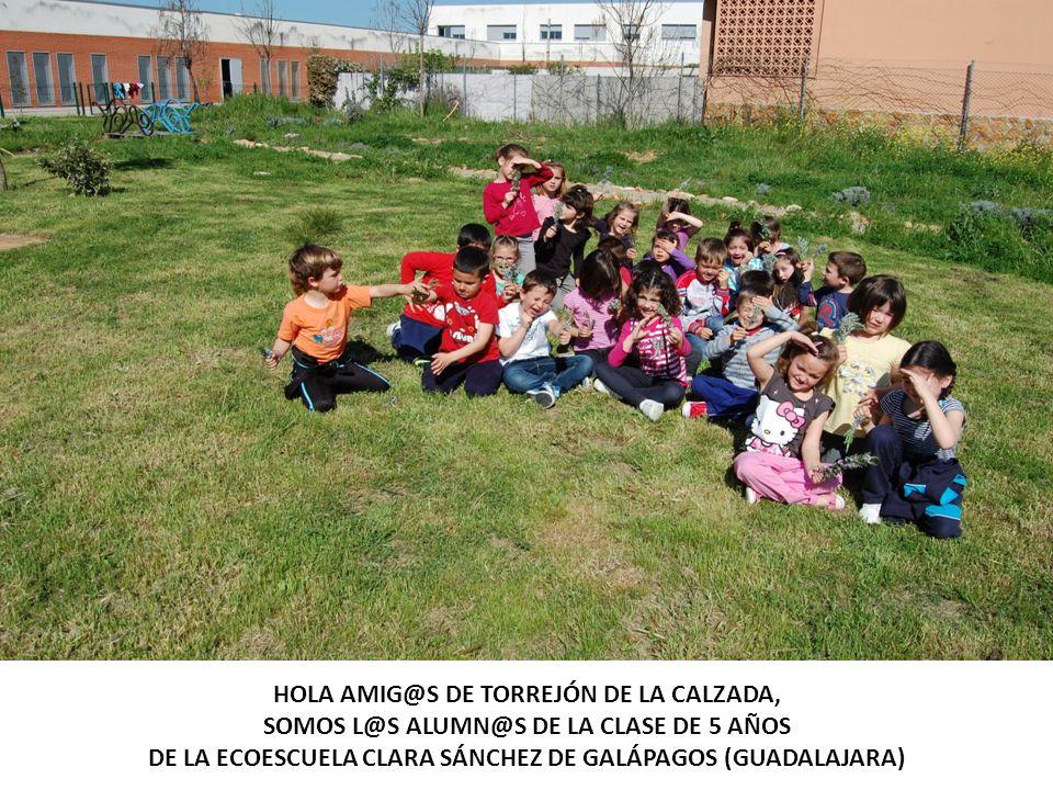 HOLA AMIG@S DE TORREJÓN DE LA CALZADA,