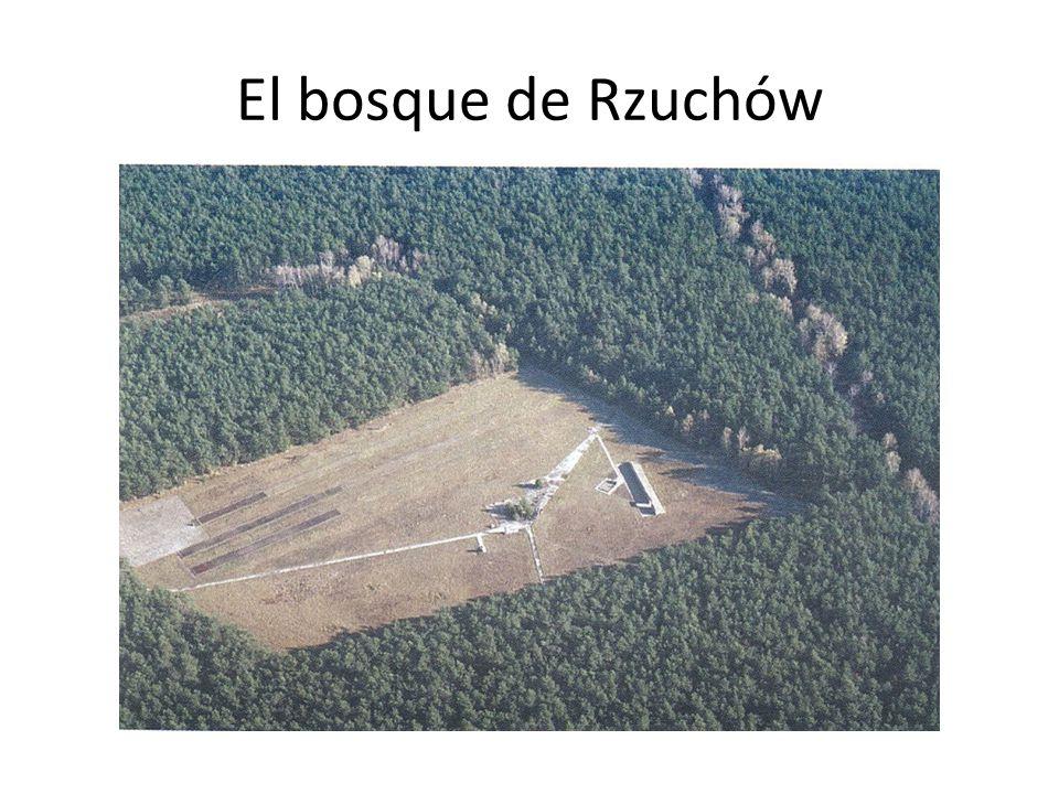 El bosque de Rzuchów
