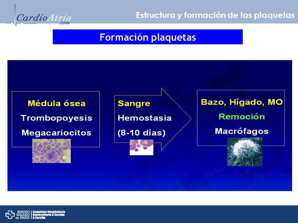 Formación plaquetas Estructura y formación de las plaquetas