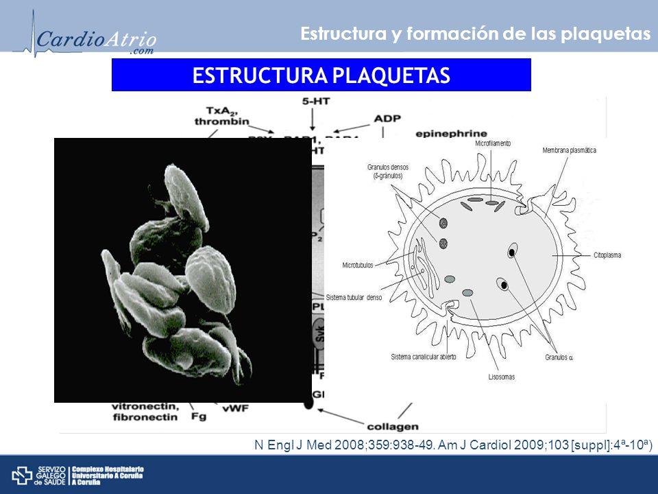 ESTRUCTURA PLAQUETAS Estructura y formación de las plaquetas