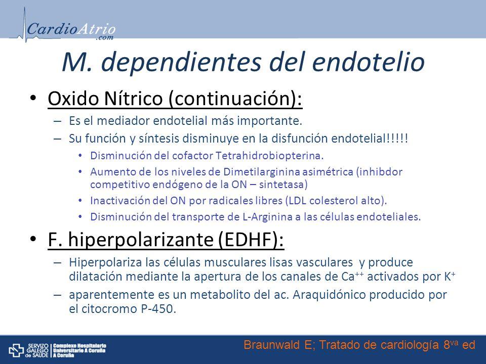 M. dependientes del endotelio