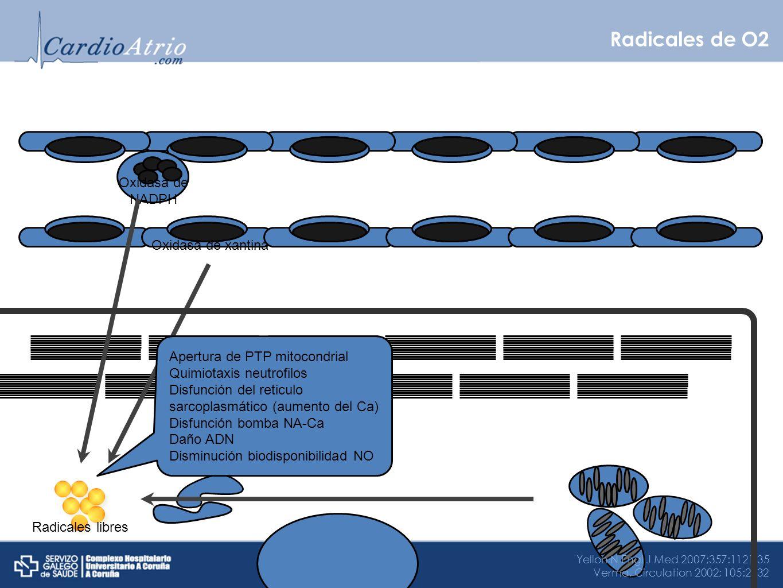 Radicales de O2 Oxidasa de NADPH Oxidasa de xantina