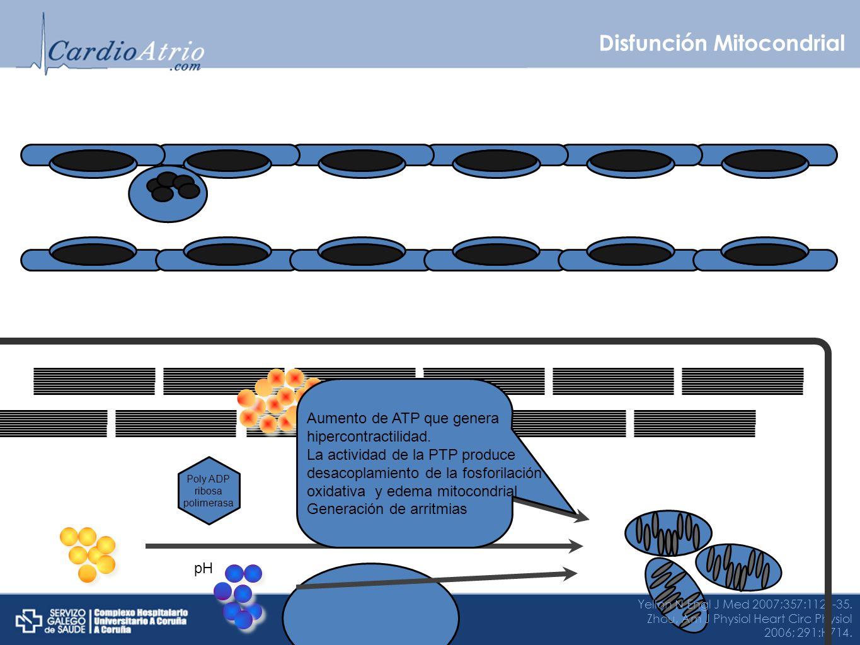 Disfunción Mitocondrial