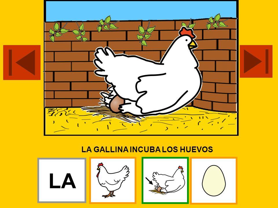 LA GALLINA INCUBA LOS HUEVOS