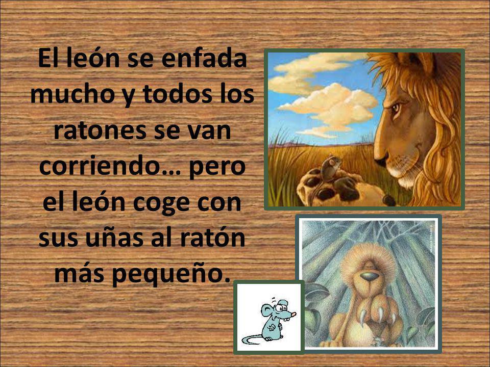 El león se enfada mucho y todos los ratones se van corriendo… pero el león coge con sus uñas al ratón más pequeño.