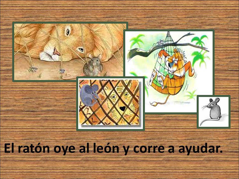 El ratón oye al león y corre a ayudar.
