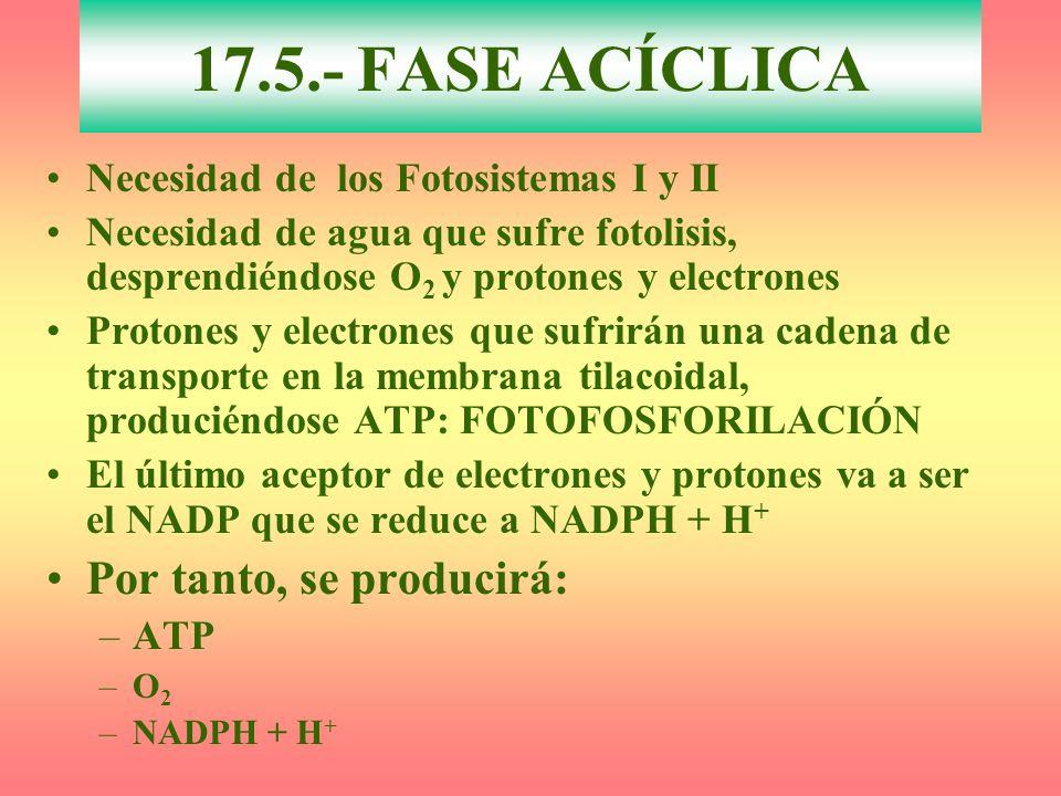 17.5.- FASE ACÍCLICA Por tanto, se producirá: