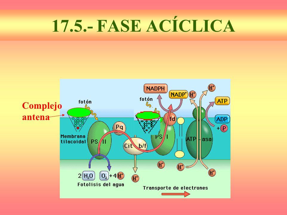 17.5.- FASE ACÍCLICA Complejoantena