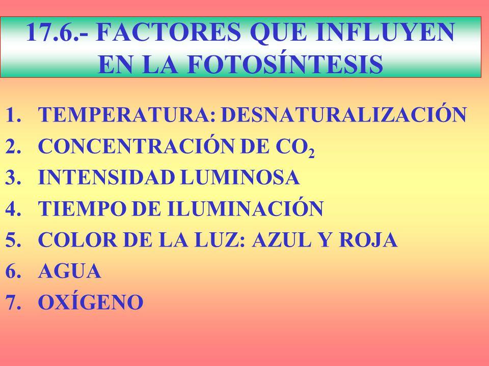 17.6.- FACTORES QUE INFLUYEN EN LA FOTOSÍNTESIS
