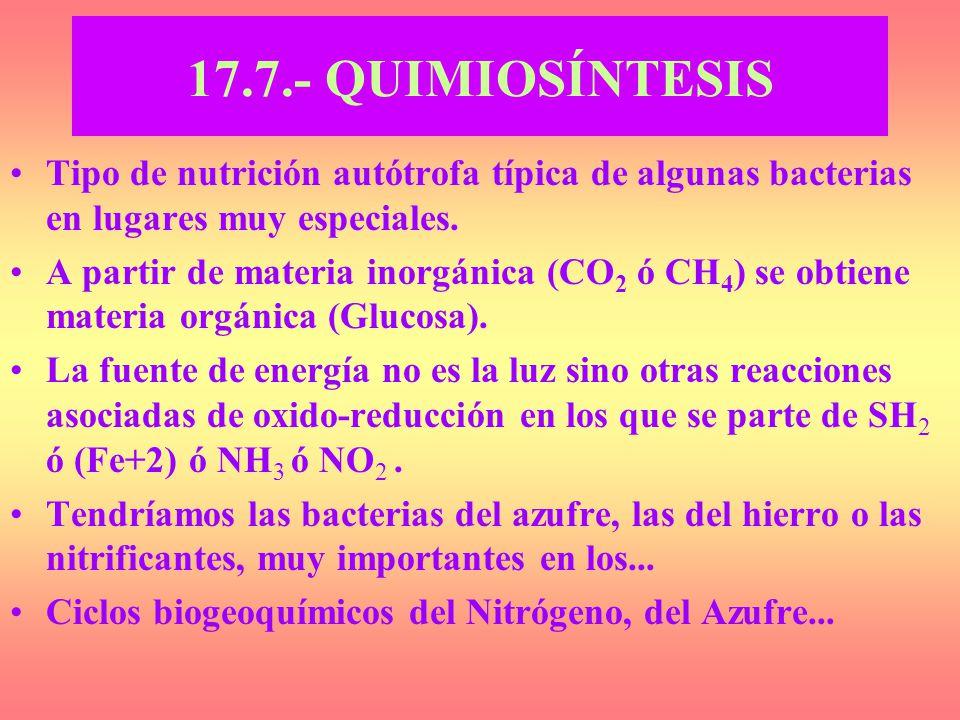 17.7.- QUIMIOSÍNTESIS Tipo de nutrición autótrofa típica de algunas bacterias en lugares muy especiales.