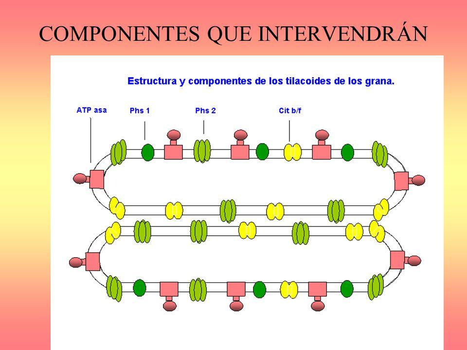 COMPONENTES QUE INTERVENDRÁN