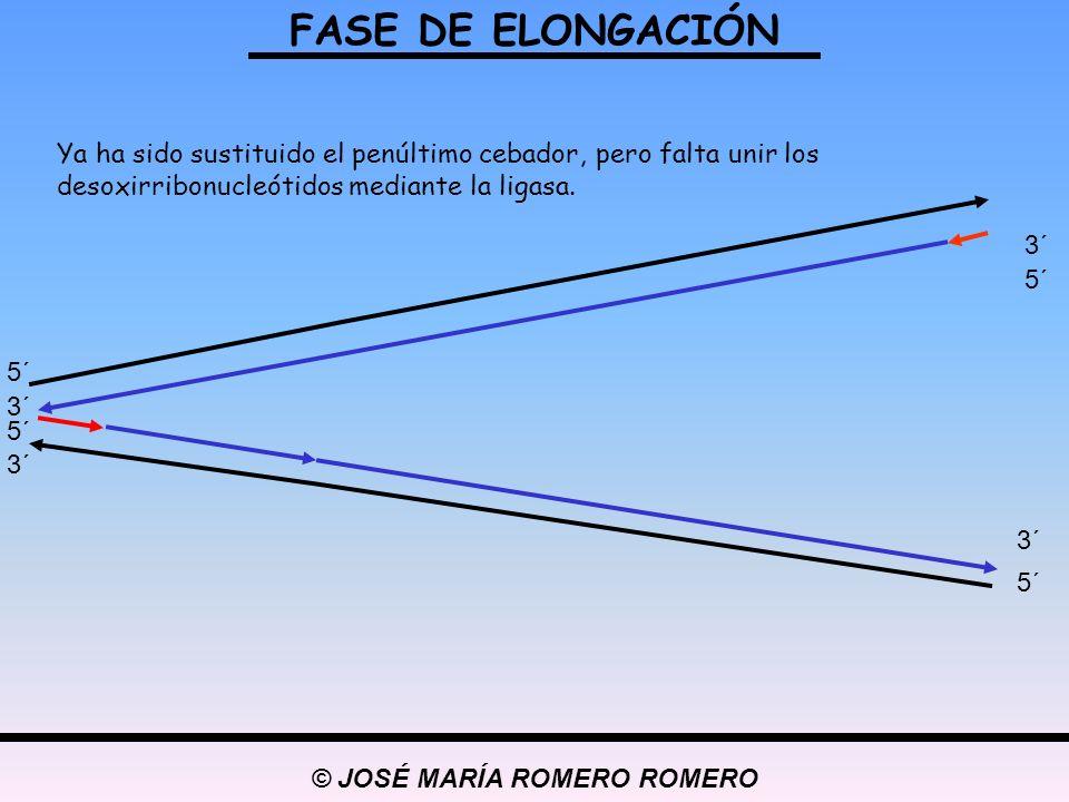 © JOSÉ MARÍA ROMERO ROMERO
