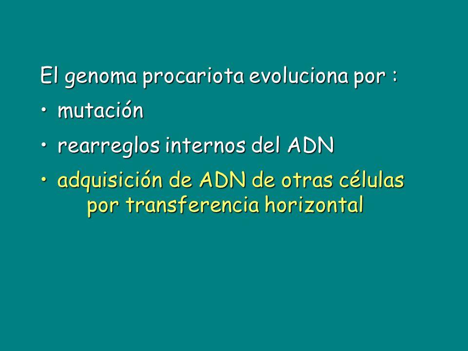 El genoma procariota evoluciona por :