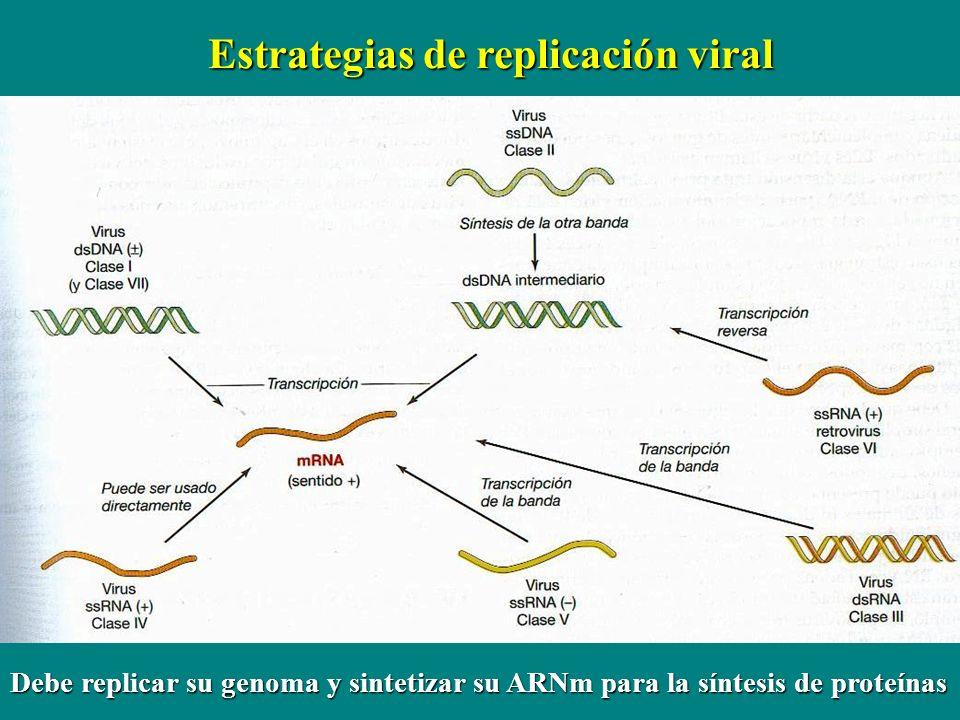 Estrategias de replicación viral