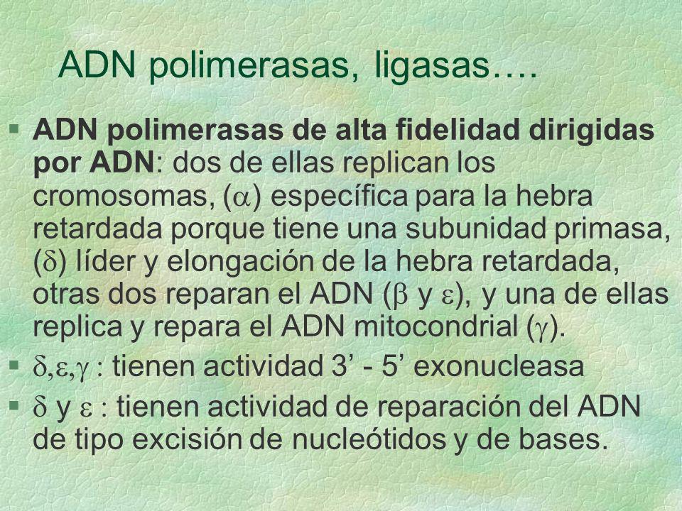 ADN polimerasas, ligasas….