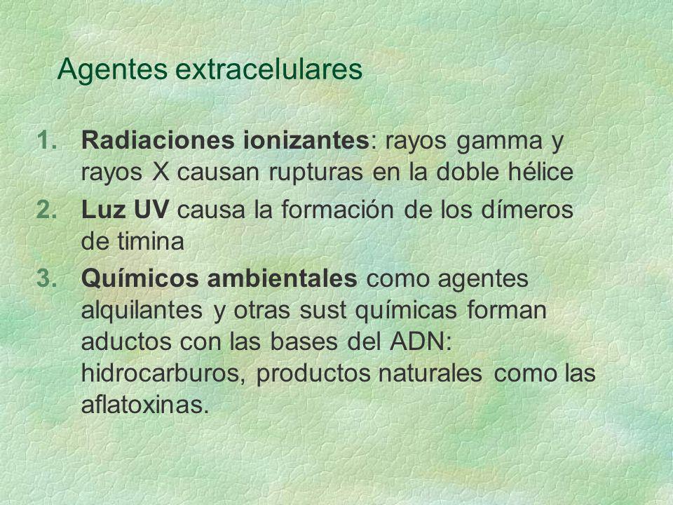 Agentes extracelulares
