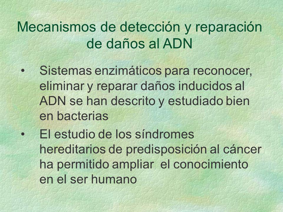Mecanismos de detección y reparación de daños al ADN