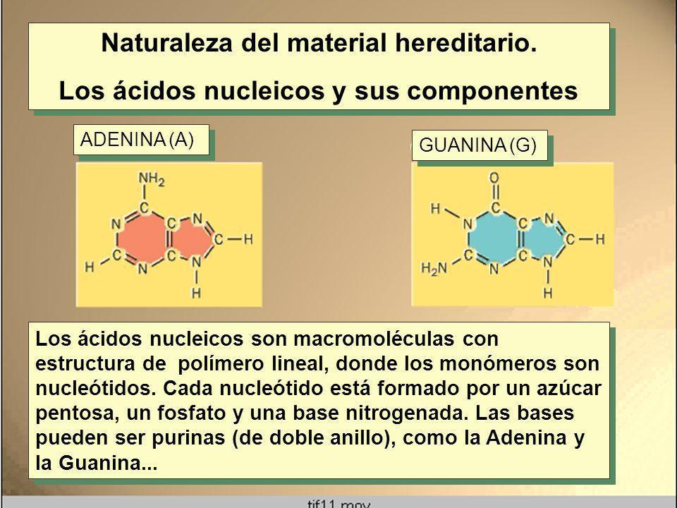 Naturaleza del material hereditario.