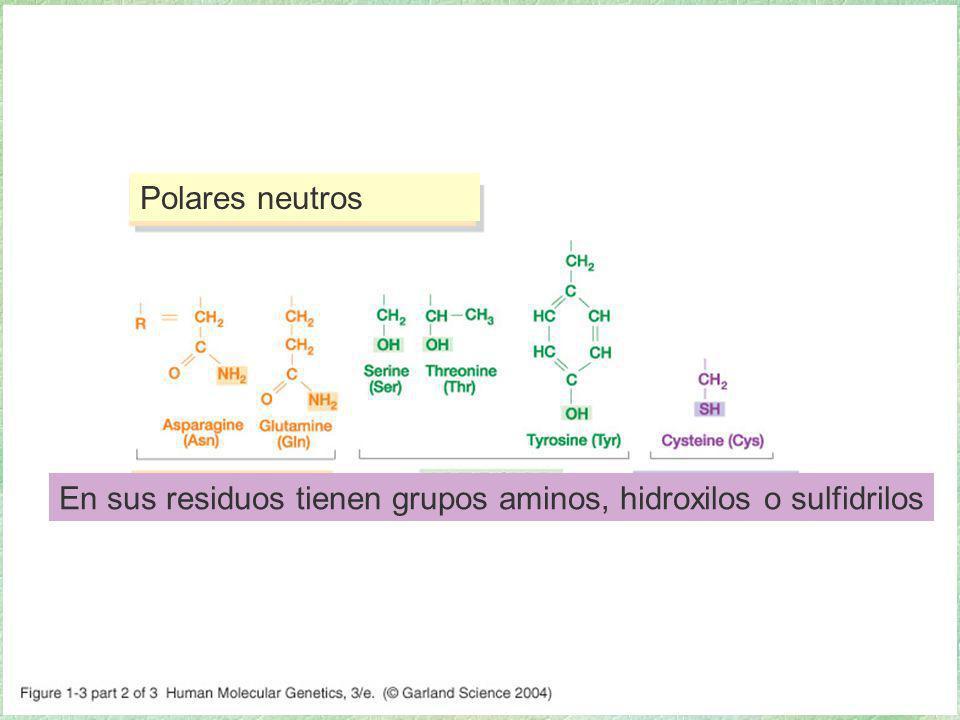 01_03_2.jpg Polares neutros. 01_03_2.jpg.