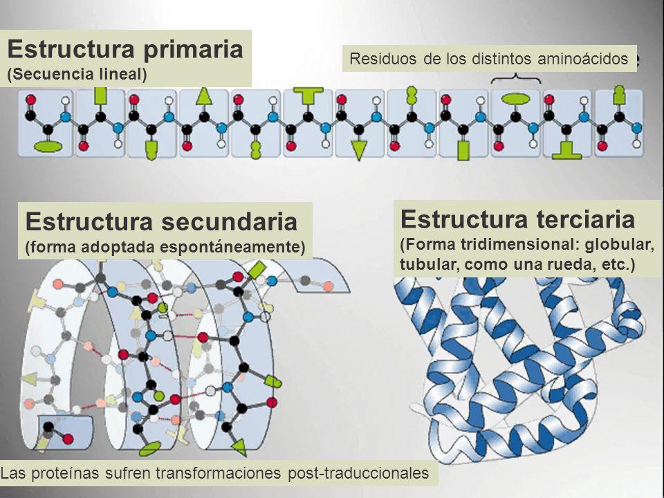 Estructura secundaria Estructura terciaria