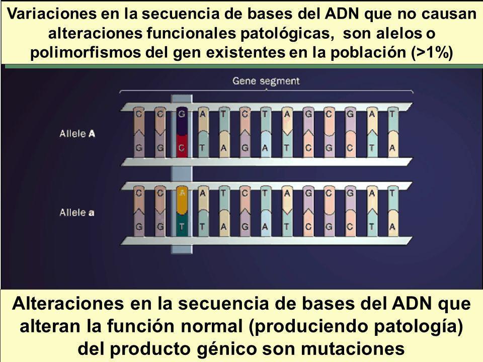 Variaciones en la secuencia de bases del ADN que no causan alteraciones funcionales patológicas, son alelos o polimorfismos del gen existentes en la población (>1%)