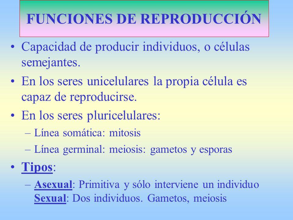 FUNCIONES DE REPRODUCCIÓN