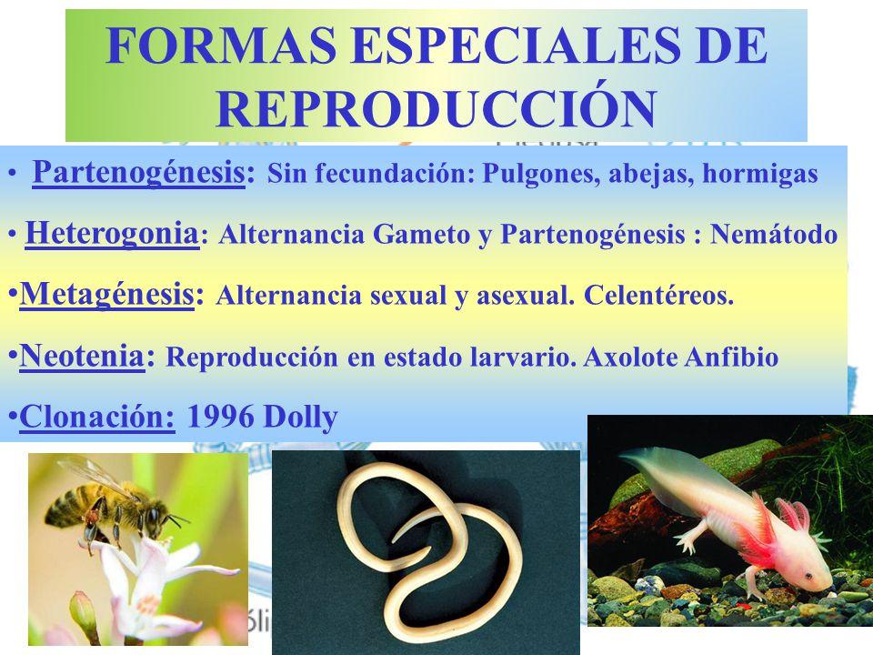 FORMAS ESPECIALES DE REPRODUCCIÓN