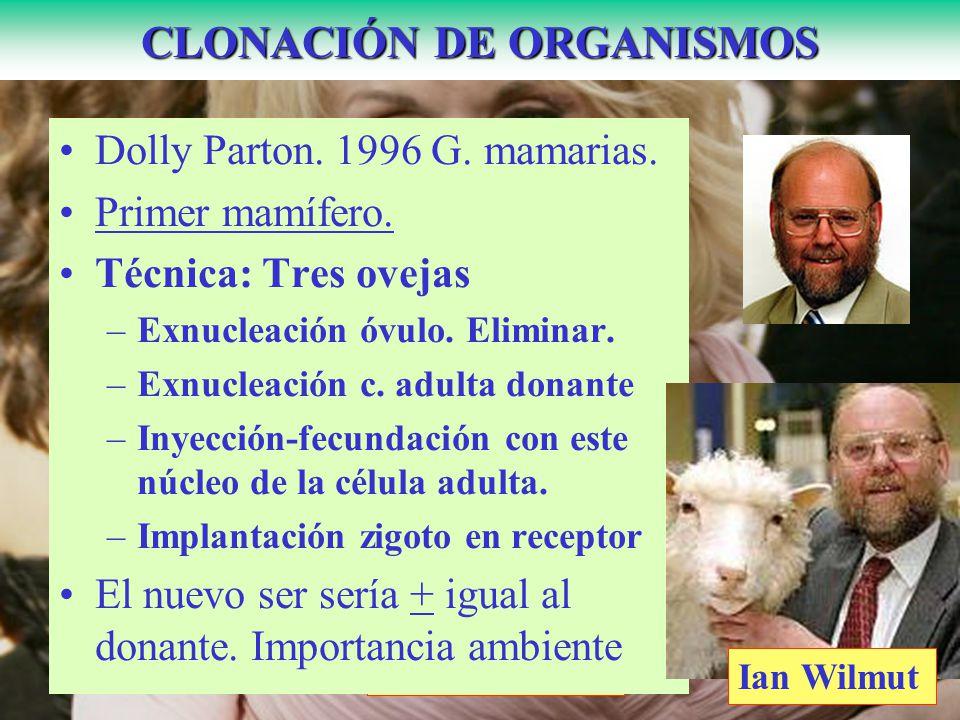 CLONACIÓN DE ORGANISMOS