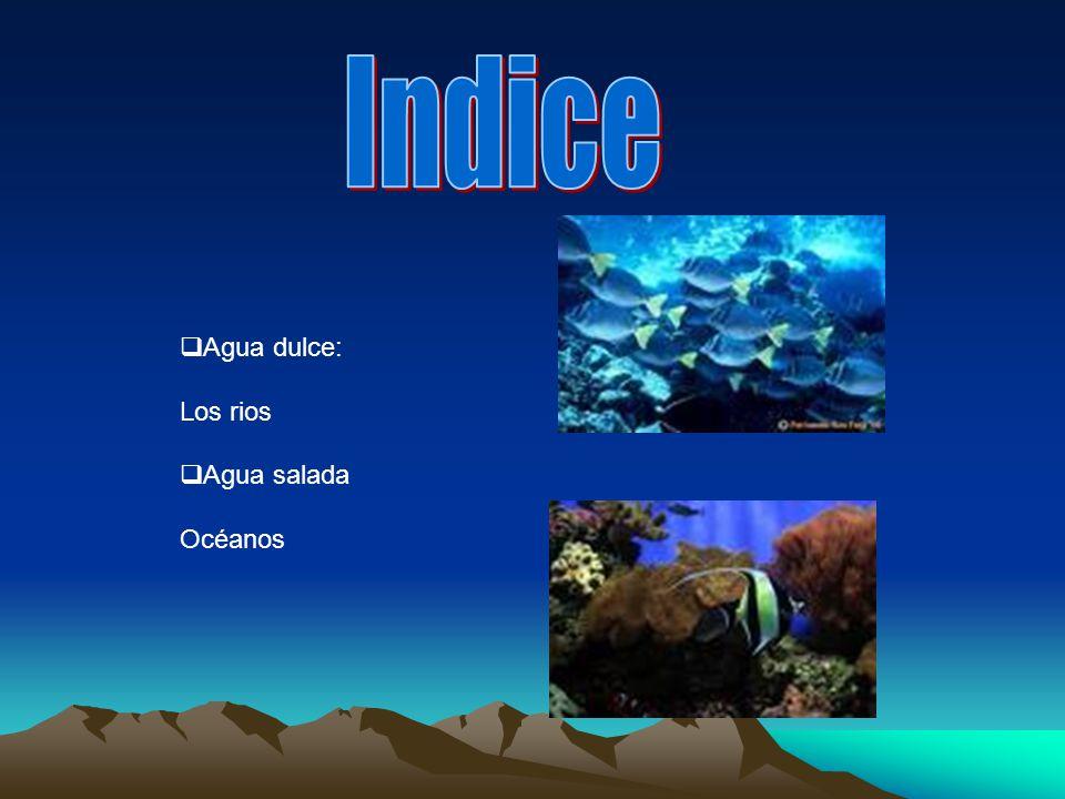Indice Agua dulce: Los rios Agua salada Océanos