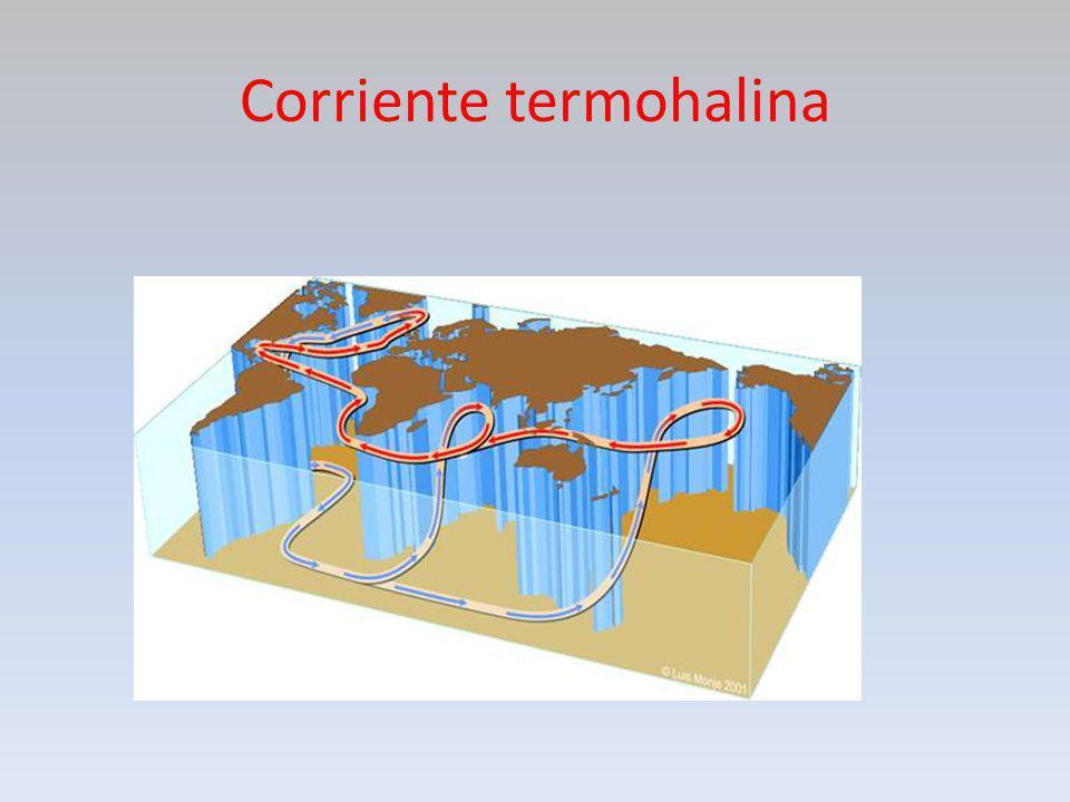 Corriente termohalina