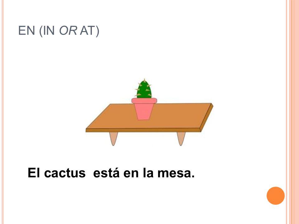 El cactus está en la mesa.