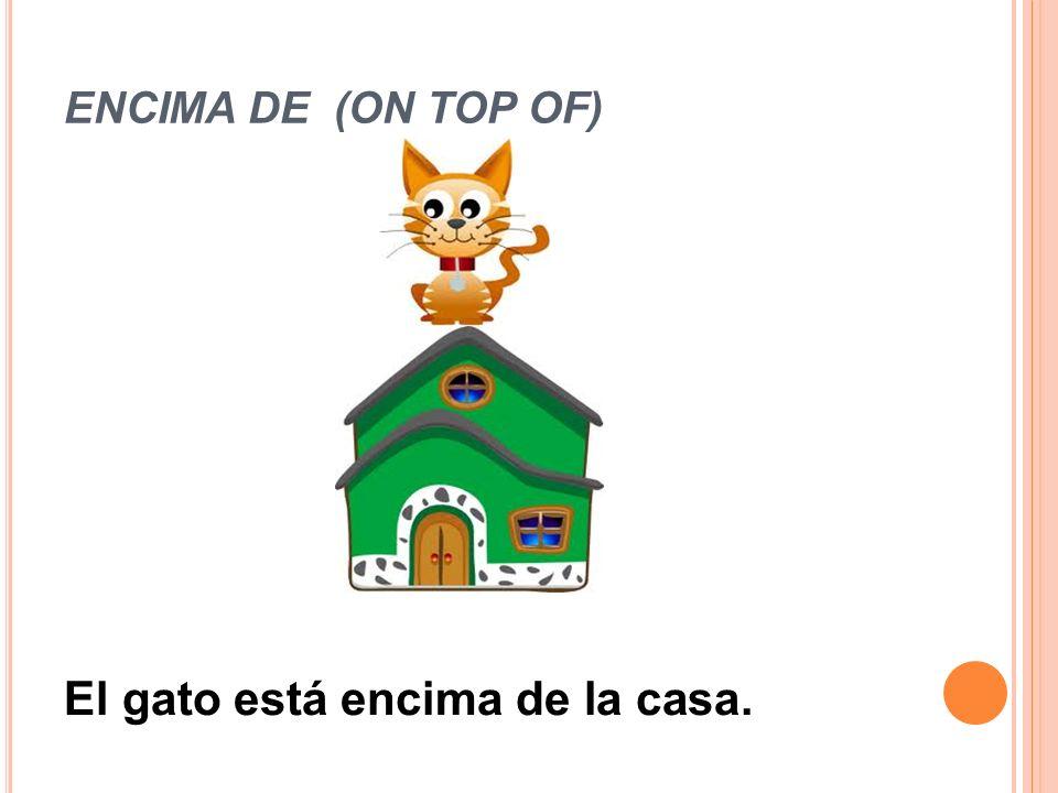 El gato está encima de la casa.