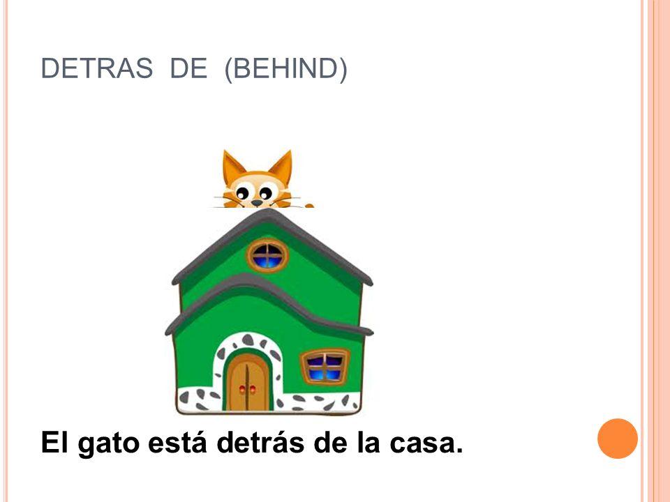El gato está detrás de la casa.