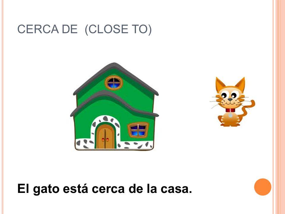 El gato está cerca de la casa.