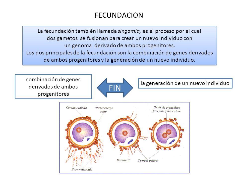 combinación de genes derivados de ambos progenitores