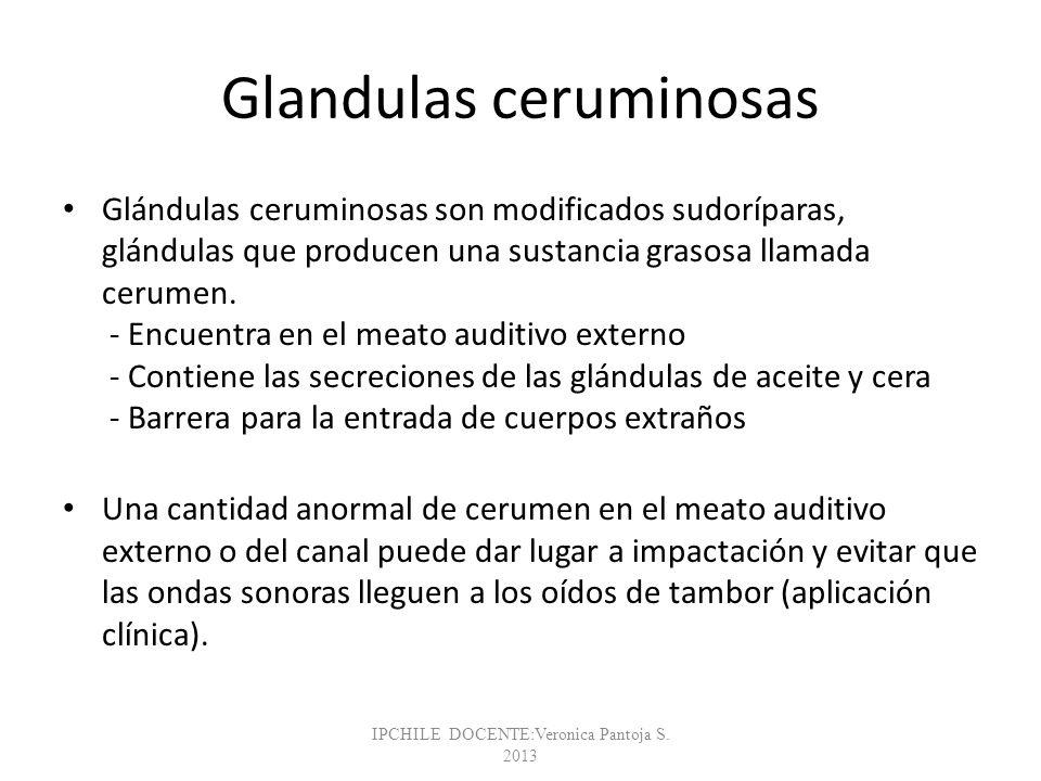 Glandulas ceruminosas
