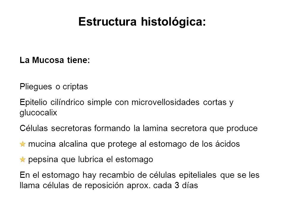Estructura histológica: