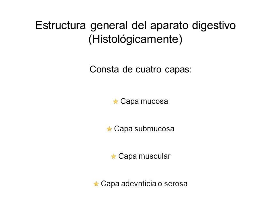 Estructura general del aparato digestivo (Histológicamente)