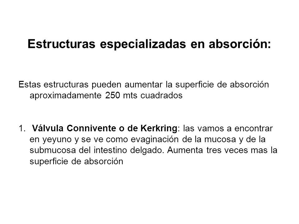 Estructuras especializadas en absorción: